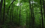 les-stromy-01
